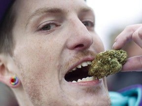 Chris Tingman takes a bite out of his 6 gram piece of marijuana while on Parliament Hill in Ottawa, April 20, 2013.