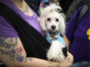 Day 1 of the Ottawa Pet Expo took place at the EY Centre on Saturday, Nov. 15, 2015.