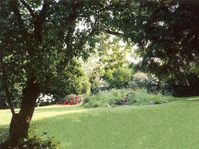 Trees not only provide shade, they also add colour to your garden.
