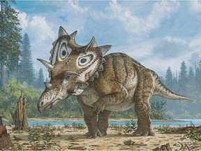 The newly identified dinosaur species limping on three legs. One front leg in the specimen they found had severe damage from arthritis and a bone infection. Illustration: Mike Skrepnick © Mike Skrepnick