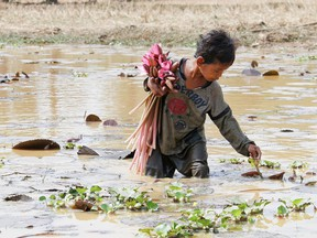 The majority of child labourers work in the agriculture sector, which includes fishing, forestry, livestock herding and aquaculture. Children may be exposed to toxic pesticides, harsh weather, and long hours hauling heavy loads and using dangerous tools and equipment. (CNW Group/World Vision Canada)