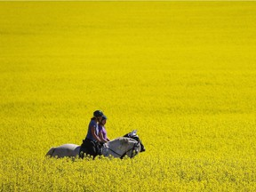 Golden harvest? A simmering trade dispute over Canadian canola exports looms as Prime Minister Justin Trudeau visits Beijing this week.