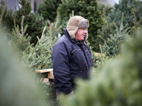 """Fabian Taillefer stands in the """"forest"""" of Christmas trees being sold by ByWard Market Trees on Saturday, Nov. 26, 2016."""