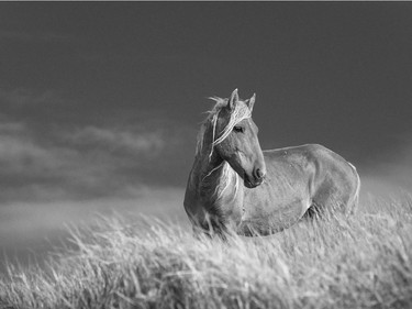 The Wild Horses of Sable Island' Photographic Exhibit by Sandy Sharkey on Until Jan. 8.