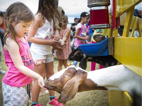 Three-year-old Devan Basset feed some goats a little snack Saturday. People came out to enjoy the The Capital Fair with the World's Finest Midway, a petting zoo, pony rides and and lots more to entertain a family Saturday, Aug. 19, 2017.