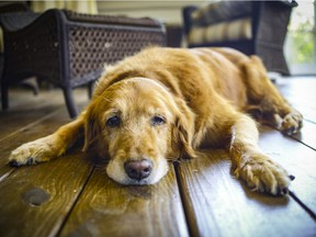 Palliative care and home euthanasia is an up and coming area of veterinary medicine.