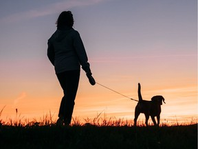 You should always check your pet for ticks after a walk in grassy or wooded areas.