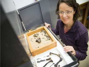 Natalia Rybczynski is a paleobiologist and one of Canada's top explorers, but she has been extremely limited by severe post-concussion symptoms since 2011. This photo, taken Friday, shows her displaying a drawer containing remains of an otter-type animal known as the Puijila darwini.  Ashley Fraser/Postmedia