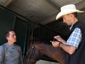 Chuckwagon Driver Mark Sutherland watches as Renaud Laguillette, the Calgary Chair in Equine Sports Medicine at University of Calgary, uses a handheld blood ammonia testing device on Zoe, a horse belonging to chuckwagon driver Mark Sutherland. The device, used for testing blood in sick humans, might prove a good tool to use Ôtrack-sideÕ to test a horseÕs fitness performance and athletic capacity.
