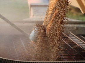 A grain truck filled with hard red spring wheat is unloaded near Winkler, Manitoba.