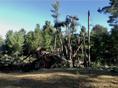 A view of one of many massive trees down in White Lake on Bayview Lodge Road.