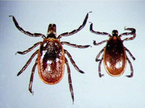 Black-legged ticks can carry the bacterium which causes Lyme disease. Experts recommend checking your body thoroughly after being outdoors, especially in areas of forest, long grass and leaf-covered ground. Postmedia Network photo ORG XMIT: POS1703271330167537 ORG XMIT: POS1707241612474142