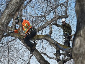 A Quebec agency says a disorganized work site and a lack of communications may have contributed to a work accident in Gatineau seven months ago which claimed the life of a tree-pruning assistant.