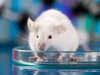 Sex bias in clinical research permeates down to which animals are used for testing.
