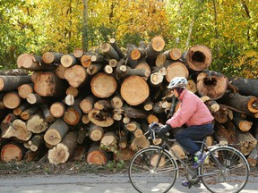 An October 2018 file photo shows a man cycling past stacked trees that had been brought down by the tornado that went through the Trend-Arlington neighbourhood a month earlier.