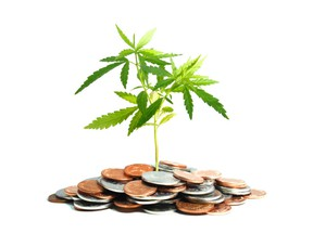 Marijuana plant growing in piles of coins isolated on white background