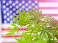 """""""The majority of voters believe that current drug policies have made the problem of drug use and addiction worse and only serve to overcrowd the nation's jails."""" /"""
