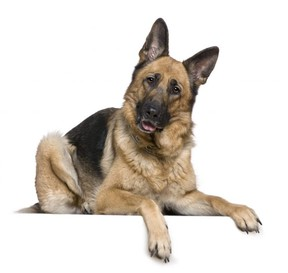 Image for representation. The officers were told that about two grams of cannabis and the victim's dog had been taken. /