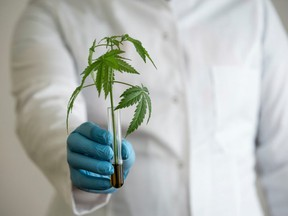 """""""Our results will enable the healthcare community to practice the use of cannabis in informed and productive ways."""""""