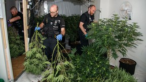 Police say they have seized more than £1 million worth of cannabis in the last two months, across multiple locations, leading to a number of arrests.