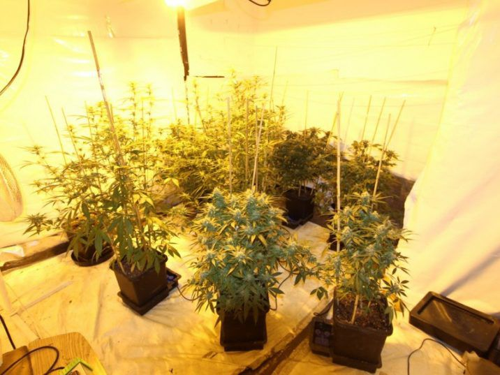 Featuring windows that had been plastered shut, a ventilation system and lights, the grow-op was contained in two upstairs bedrooms.