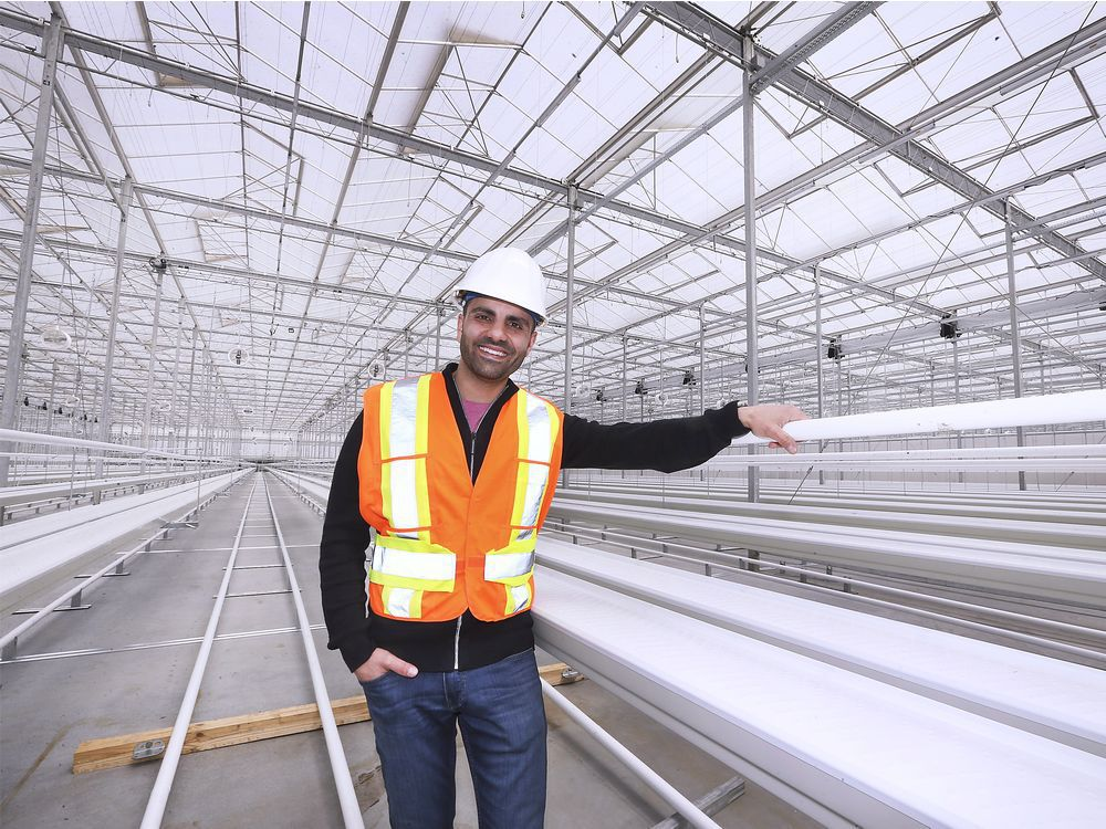 In this April 11, 2019, file photo, Tony Abbas, general manager of PharmHouse, is shown inside one of the greenhouse areas under construction at the company's Leamington facility at Highway 77 and Mersea Rd. 11. Health Canada has now granted PharmHouse a cultivation licence.