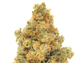 MTL Cannabis launched their Sage N Sour cultivar in October 2020. The sativa-dominant cross between Sour Diesel and S.A.G.E. is high in THC but also has a punch of CBG.