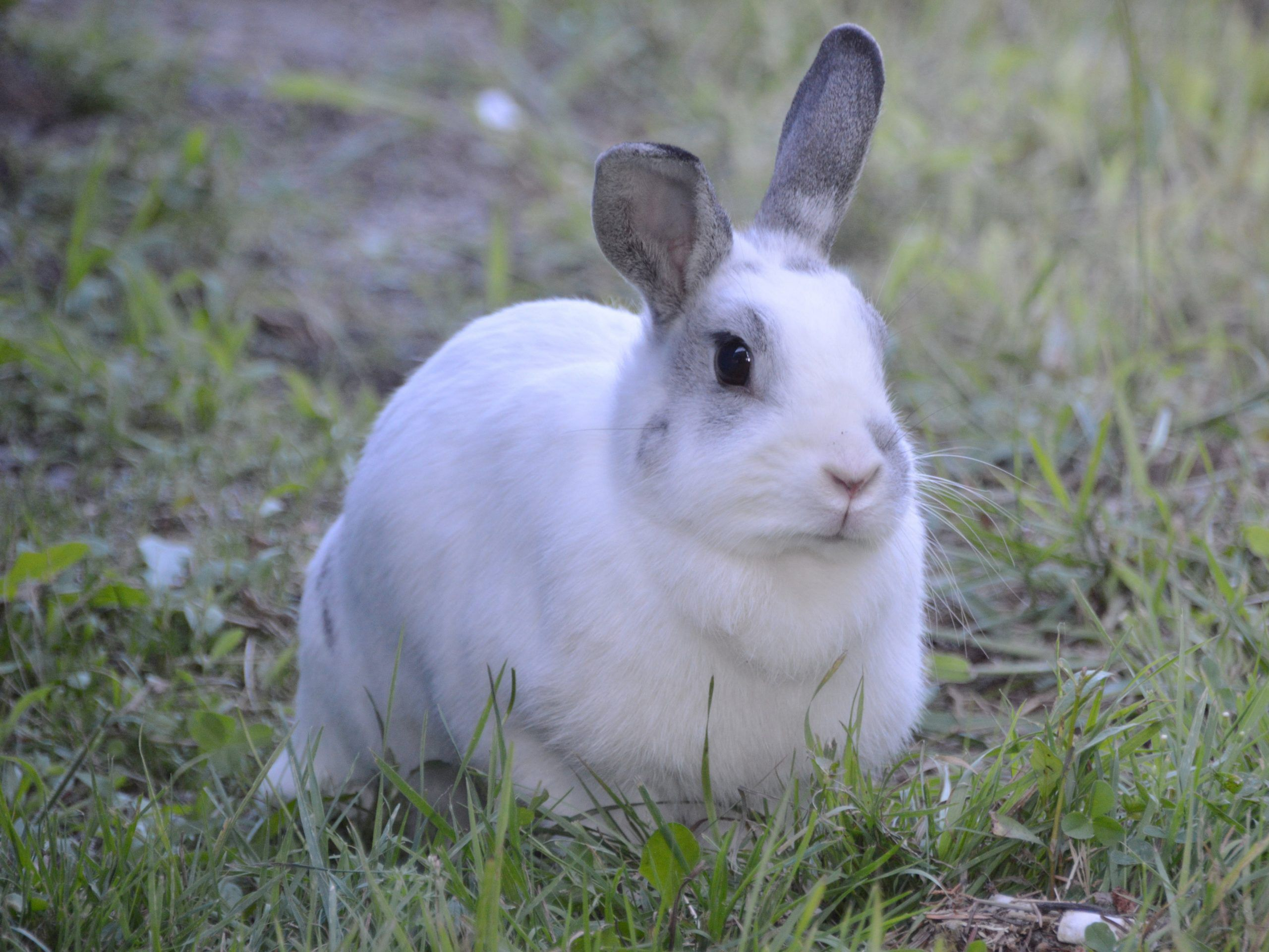 Judge doesn't buy excuse that man caught with nearly $90,000 worth of cannabis was rabbit hunting