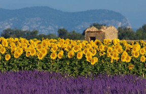 Ah, the south of France.
