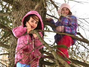 There's no law stopping kids from climbing trees, so the fact it's no longer a common sight probably has a lot to do with protective parents.