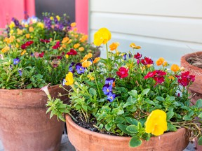 Take the time to fine tune your garden containers and be rewarded with extra vibrant growth.