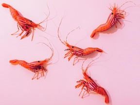 Spot prawns are in season. You can order them from Organic Ocean or pick them up in person — socially distanced and masked, of course — at the False Creek Fishermen's Terminal. Photo Kevin Clark