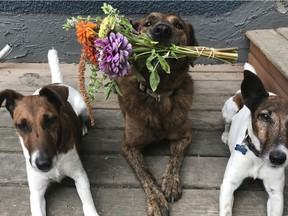Shona Gagnon's three dogs have helped her remain positive during the COVID-19 pandemic.