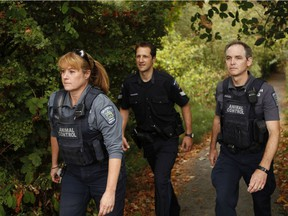 Saanich Police animal control officers Susan Ryan and Derek Rees with Det.-Sgt. Damian Kowalewich (Centre) along a trail in Swan Lake in Saanich. Saanich police is the only B.C. department to employ its own animal control officers as the district has put down more animals than any other department in B.C., primarily deer hit by vehicles. It has a track record of killing them humanely.