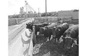 The beef research station east of Sutherland Beach in Saskatoon is moving to open the land for development.