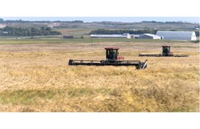 Farmers were back in the field swathing this years crop after a fairly lengthy rain delay, September 11, 2015