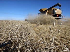 Wheat research in Western Canada today received a five-year, $21.4 million boost from the Western Grains Research Foundation.