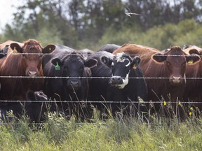 A new $38-million agricultural research centre southeast of Saskatoon is expected to improve livestock production across the province and country by facilitating research into a host of issues, inlcuding cattle health, reproduction, nutrition genetics and pasture management.