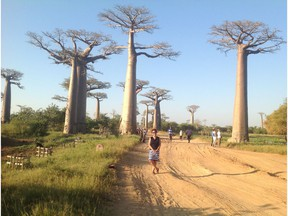 """""""Dr. Lesya Sabada pictured in Madagascar with boabab trees. The boabab, known as Africa's Tree of Life, is losing life thanks to deteriorating environmental conditions. (For Saskatoon StarPhoenix Weekender Religion column by Darlene Polachic. For Sept 15, 2018)"""