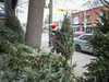 Lot manager Jonathan Howcroft of Sweatpea's Christmas Tree Lot tends to the trees along Roncesvalles Ave. in Toronto, Ont. on Wednesday December 20, 2017. Due to an anonymous complaint, the business is forced to clear its remaining 150 trees by the end of the day on  Wednesday December 2017.  Ernest Doroszuk/Toronto Sun/Postmedia Network
