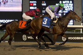 Avie's Flatter is the 5-1 favourite heading into today Queen's Plate at Woodbine Racetrack.michael burns photo