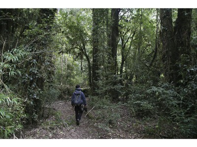 Hiking though the rainforest at the Puyehue National Park in Chile on Saturday September 7, 2019. Veronica Henri/Toronto Sun/Postmedia Network