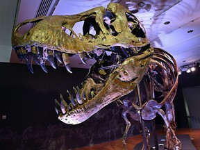 In this file photo taken on September 15, 2020, a Tyrannosaurus Rex skeleton is on display during a press preview at Christie's Rockefeller Center on September 15, 2020 in New York.