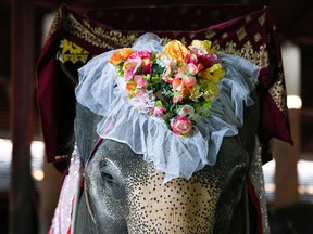 An elephant decorated with flowers in a heart shape is seen before a Valentine's Day celebration at the Nong Nooch Tropical Garden in Chonburi province, Thailand, February 14, 2021.