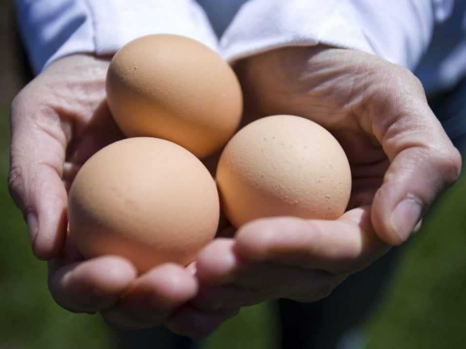 LAU: Trudeau government enforces price gouging for chicken and eggs