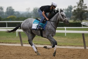 Essential Quality gallops during morning workouts prior to the 153rd running of the Belmont Stakes. Essential Quality is the favourite.