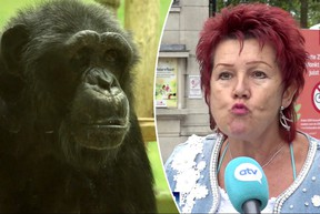 Adie Timmermans wants to marry the chimp known as Chita. Zoo officials say that is a problem.