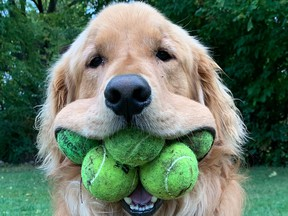 Finley can carry around six tennis balls in his mouth at one time, which makes him a Guinness World Record holder, according to PEOPLE.