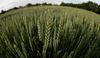 Thanks to Manitoba's agricultural sector, the local economy is expected to grow by 3.3% in 2012, according to RBC Economics. (REUTERS Files)