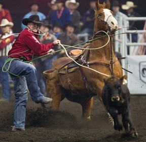 Curtis Cassidy competes in the calf roping event during the final day of Canadian Finals Rodeo (CFR) at Rexall Place in Edmonton on Sunday, November 11, 2012. CODIE MCLACHLAN/EDMONTON SUN QMI AGENCY
